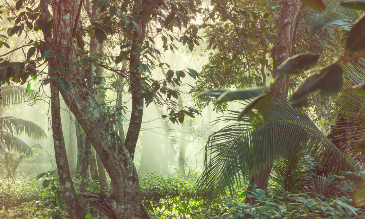 Jungle in Costa Rica